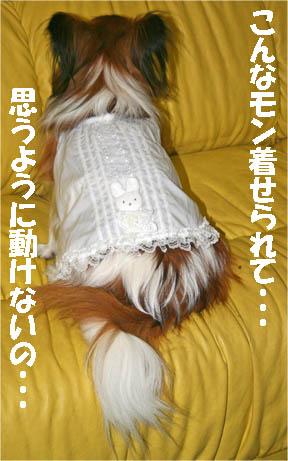 yuzu070126-3.jpg