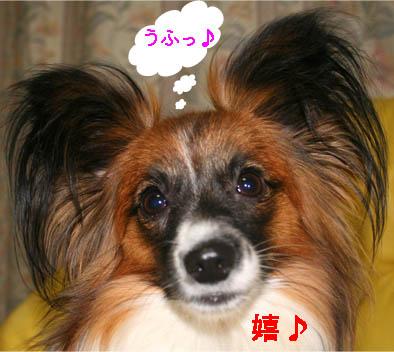 yuzu070126-6.jpg