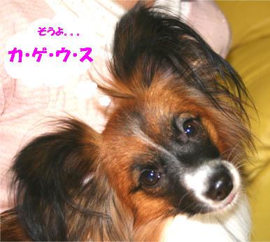 yuzu070129-1.jpg