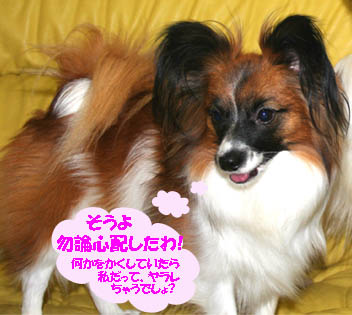 yuzu070131-1.jpg