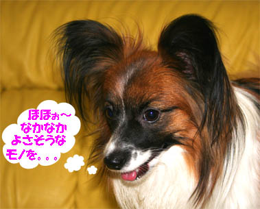 yuzu070201-3.jpg