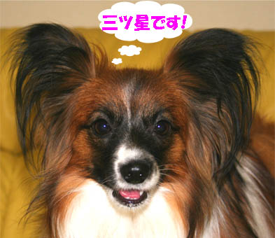 yuzu070201-4.jpg