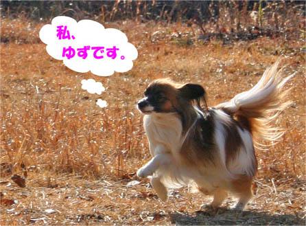 yuzu070204-1.jpg