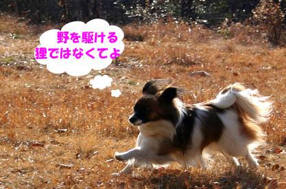 yuzu070204-2.jpg