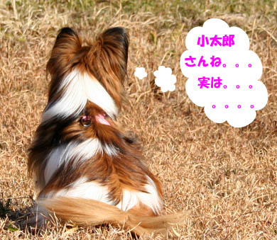 yuzu070204-5.jpg