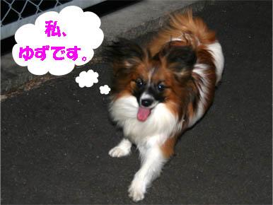yuzu070205-1.jpg