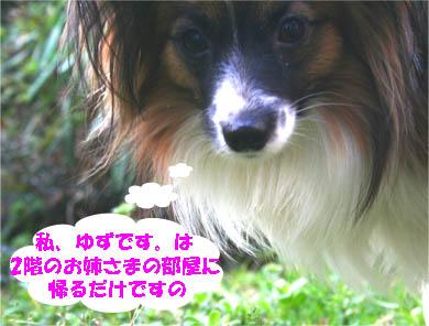 yuzu070222-4.jpg