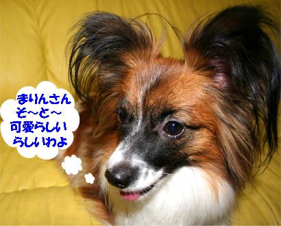 yuzu070226-1.jpg