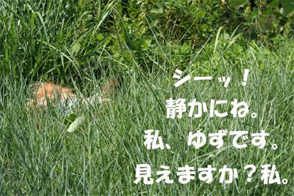 yuzu070228-1.jpg