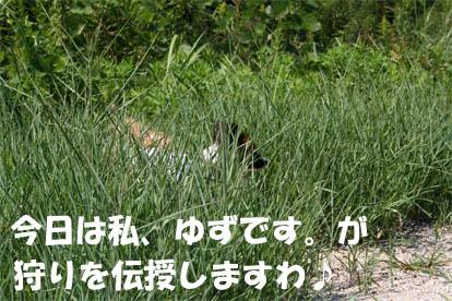 yuzu070228-2.jpg