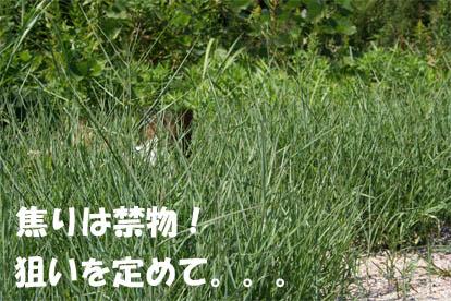 yuzu070228-3.jpg