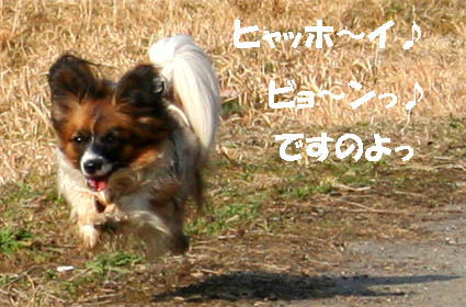 yuzu070306-1.jpg