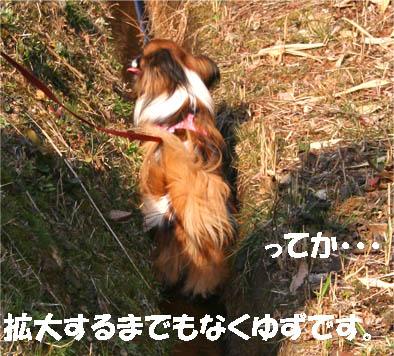 yuzu070306-3.jpg