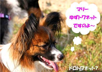 yuzu070310-1.jpg