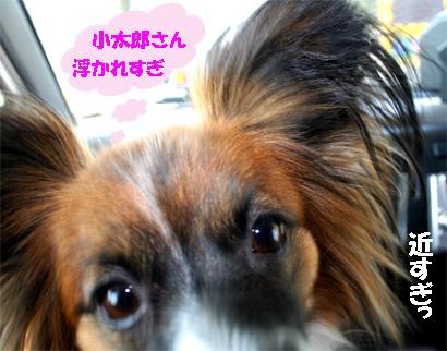 yuzu070312-1.jpg