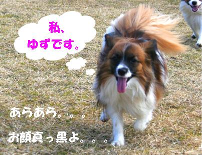 yuzu070316-1.jpg