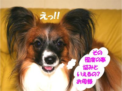 yuzu070316-3.jpg