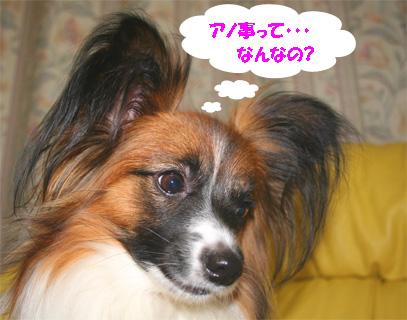 yuzu070316-4.jpg