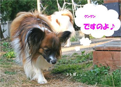 yuzu070317-1.jpg