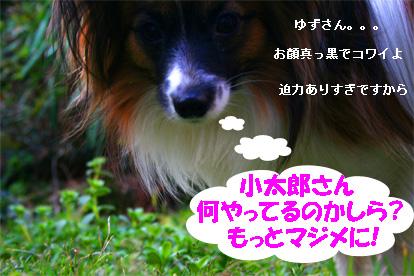yuzu070317-2.jpg