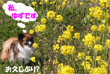 yuzu070327-1.jpg