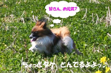 yuzu070327-2.jpg