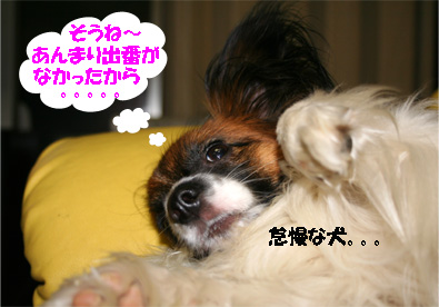 yuzu070328-3.jpg