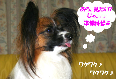 yuzu070328-4.jpg