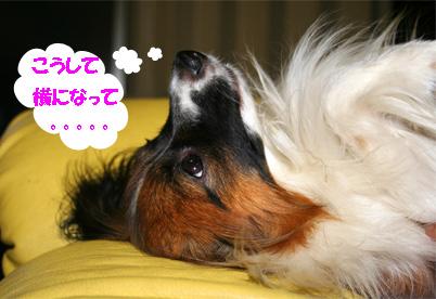 yuzu070328-5.jpg