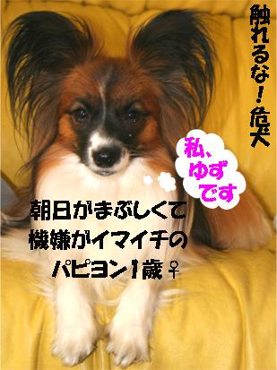 yuzu070329-1.jpg