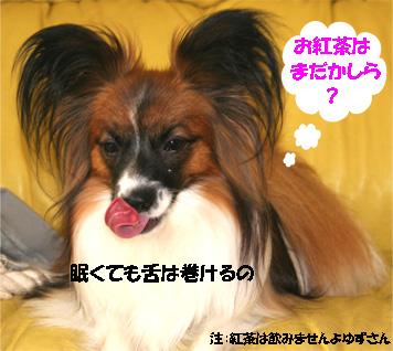 yuzu070329-2.jpg
