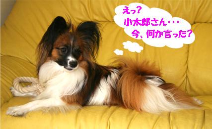yuzu070329-3.jpg