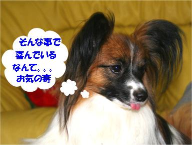yuzu070330-1.jpg