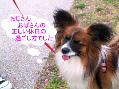 yuzu070331-1.jpg