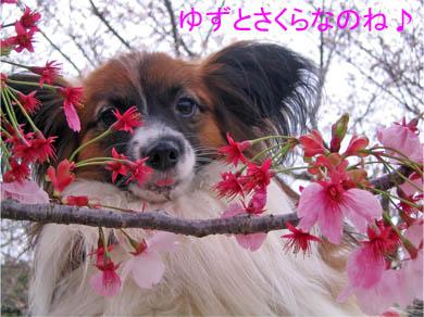 yuzu070401-1.jpg