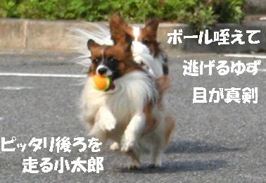 yuzu070410-1.jpg