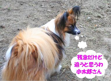 yuzu070411-1.jpg