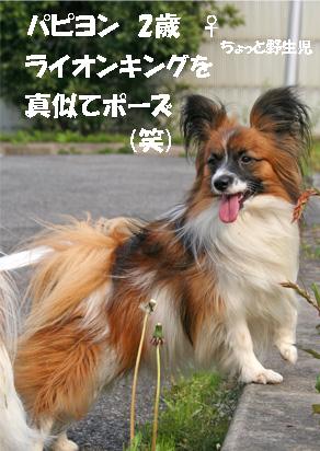 yuzu070412-1.jpg