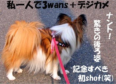 yuzu070413-1.jpg