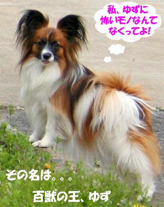 yuzu070414-1.jpg
