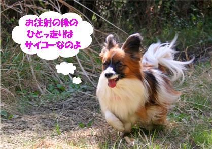 yuzu070417-2.jpg