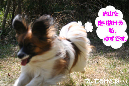 yuzu070417-3.jpg