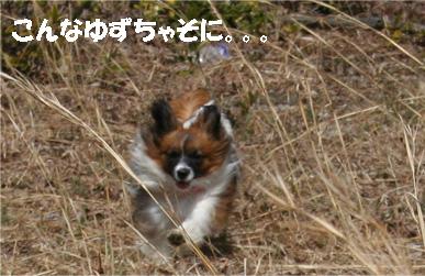 yuzu070417-4.jpg