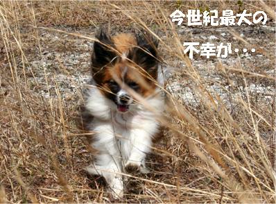 yuzu070417-5.jpg