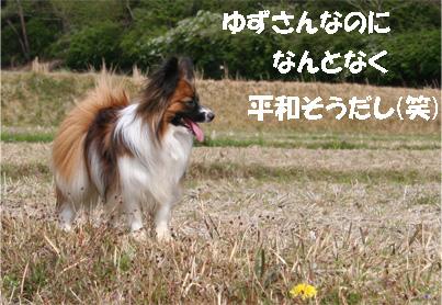 yuzu070423-1.jpg