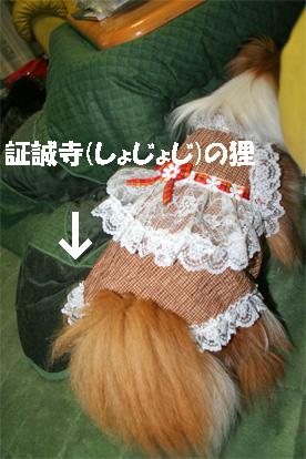 yuzu070424-1.jpg