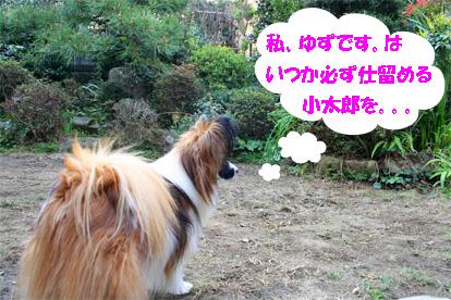 yuzu070424-3.jpg