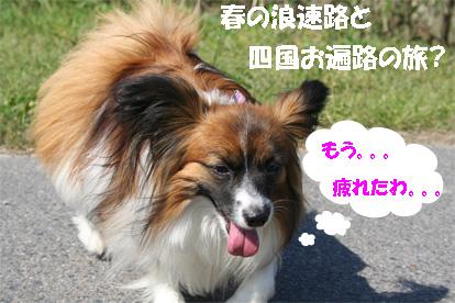 yuzu070502-1.jpg