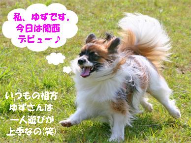 yuzu070507-1.jpg