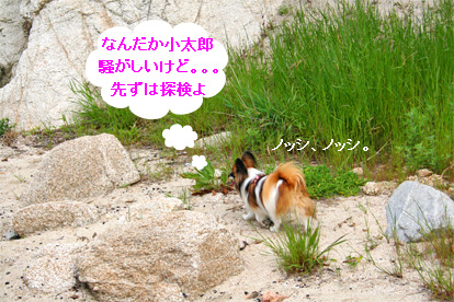 yuzu070511-1.jpg